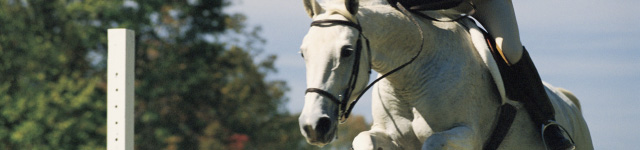 Natural Therapy Wellness Center McHenry Equestrian Massage