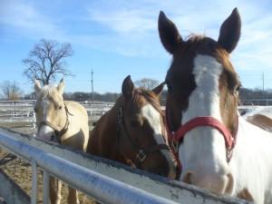 Heather Duh, Equine Sports Horse Massage Therapist