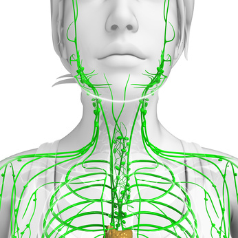 Illustration of female body lymphatic system