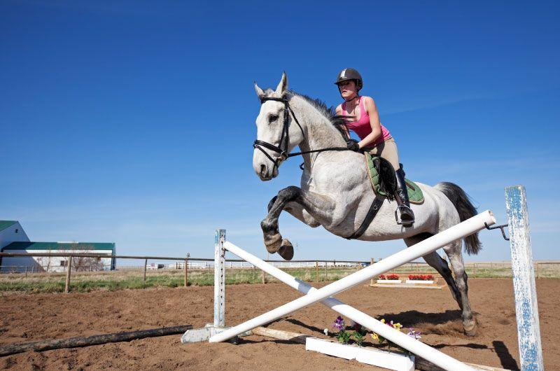 equestrian massage in McHenry IL